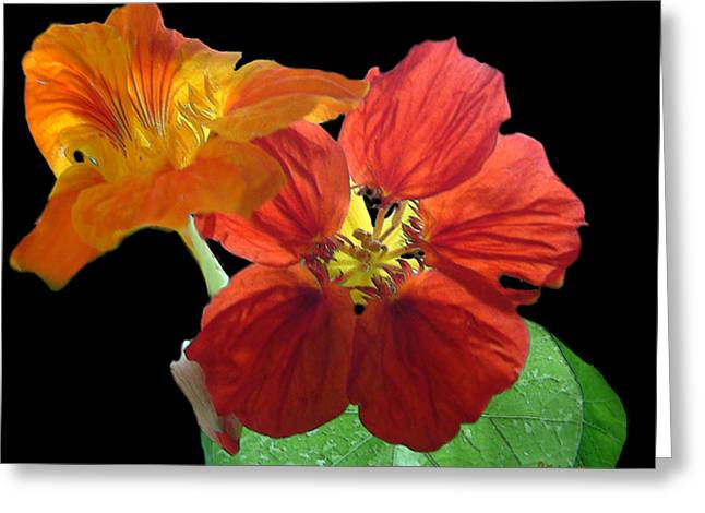Flowers For Ebie Greeting Card by RC deWinter