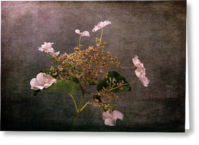 Greeting Card featuring the photograph Flowers For The Mind by Randi Grace Nilsberg