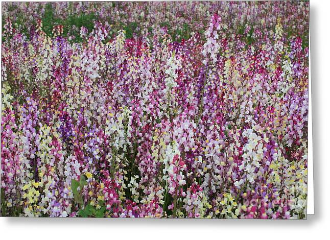 Flowers Forever Greeting Card by Carol Groenen