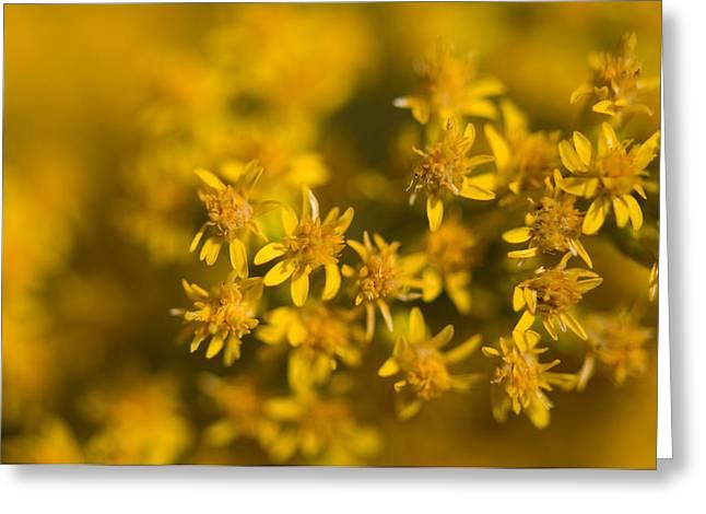 Flowers In Eastern Montana Greeting Card by Joel Sartore