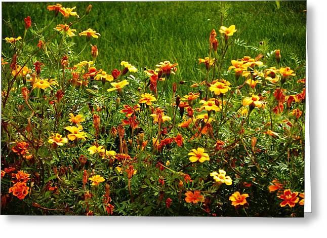 Flowers In The Fields Greeting Card by Joseph Frank Baraba