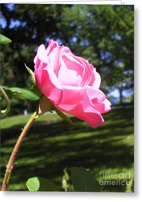 Flowers In The Garden Xix Greeting Card by Daniel Henning