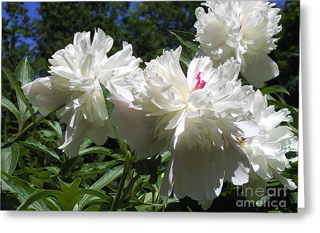 Flowers In The Garden Xx Greeting Card by Daniel Henning