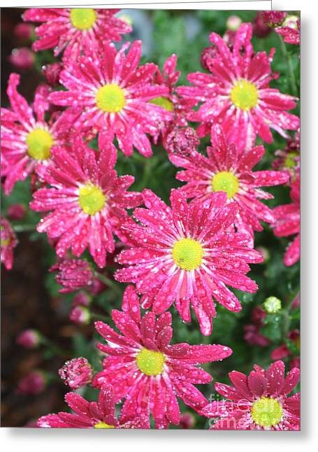 Flowers In The Rain Greeting Card by Amy Holmes