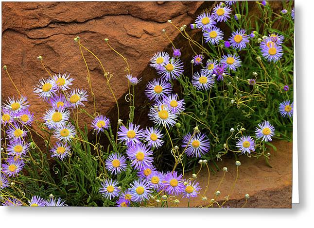 Flowers In The Rocks Greeting Card by Darren White