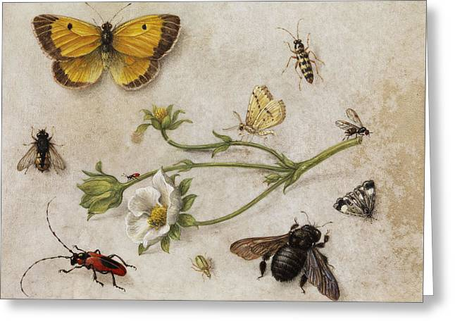 Flowers, Insects And Butterflies Greeting Card
