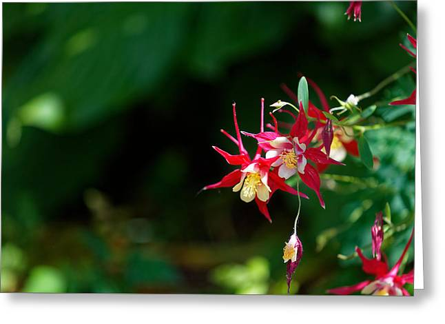 Flowers Of Battery Park Greeting Card by M Nuri Shakoor