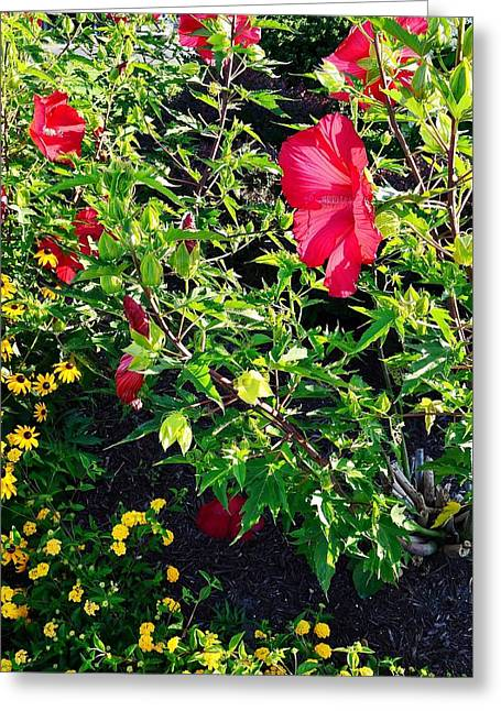 Flowers Of Bethany Beach - Hibiscus And Black-eyed Susams Greeting Card