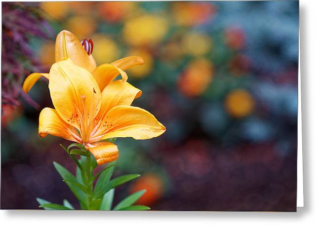 Flowers Of Central Park IIi Greeting Card by M Nuri Shakoor