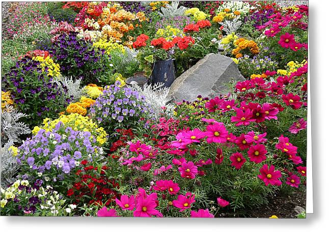 Flowers Of Skagway Greeting Card