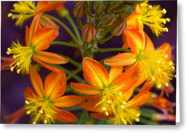 Greeting Card featuring the photograph Flowers Of Spring by Stephen Anderson