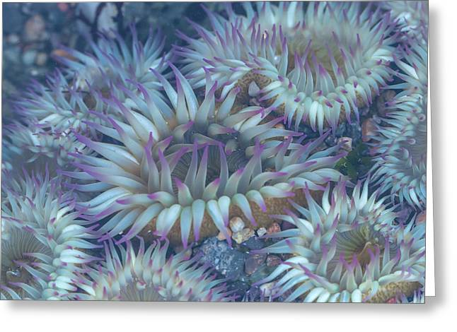 Flowers Of The Sea Greeting Card by Jonathan Nguyen