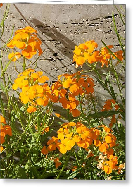 Flowers Orange 2 Greeting Card by Warren Thompson