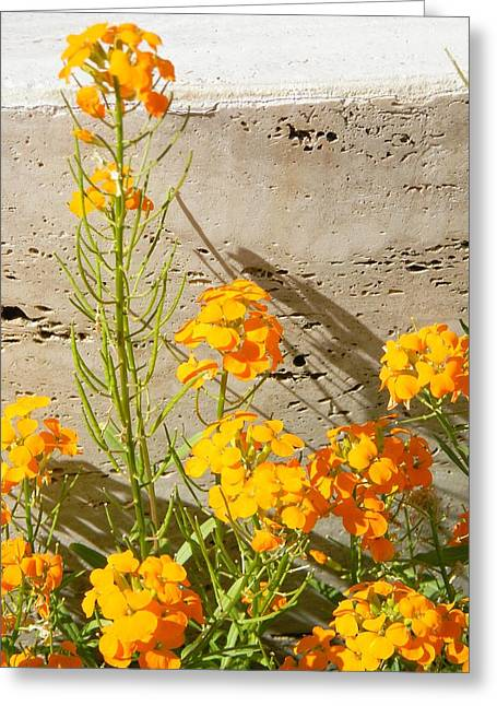 Flowers Orange Greeting Card by Warren Thompson
