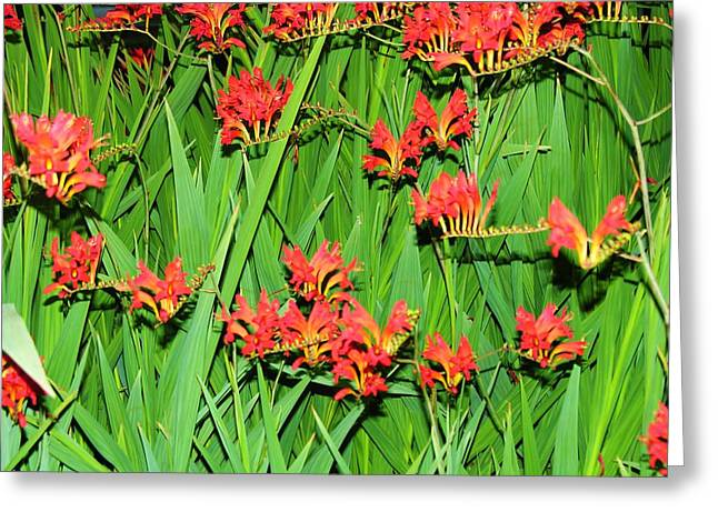 Flowers Singing Greeting Card by Mel Crist