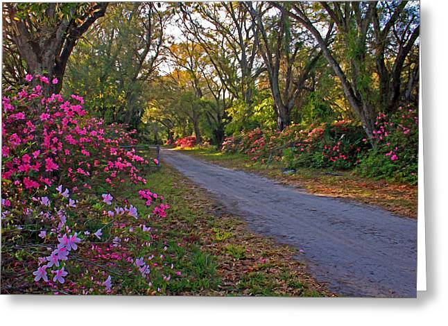 Flowers - Spring Fling Greeting Card by HH Photography of Florida