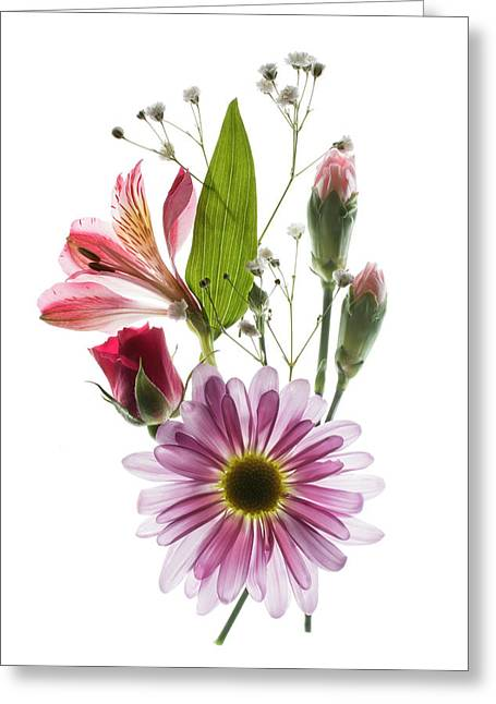 Flowers Transparent 1 Greeting Card by Tom Mc Nemar