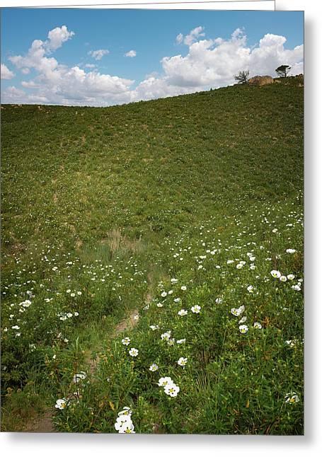 Flowery Hills Greeting Card