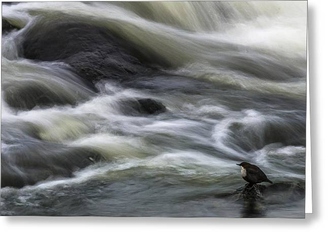 Flowing Contemplation Greeting Card by Arne ?stlund
