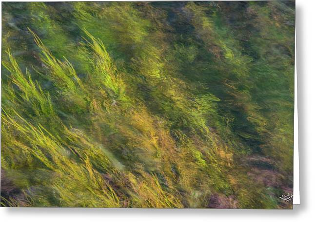 Flowing Luminescence Greeting Card by Leland D Howard