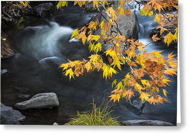 Flowing Oak Creek Canyon Under Colorful Leaves Greeting Card