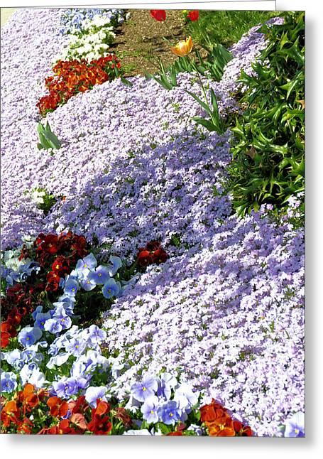 Flowing Phlox Greeting Card by Jan Amiss Photography