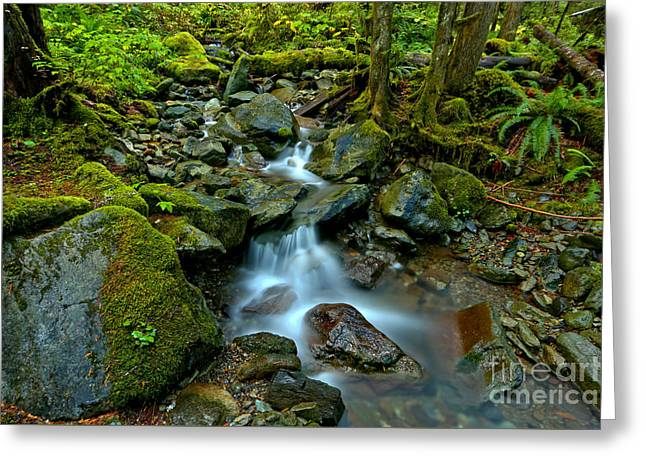 Flowing Through Moss And Ferns Greeting Card by Adam Jewell