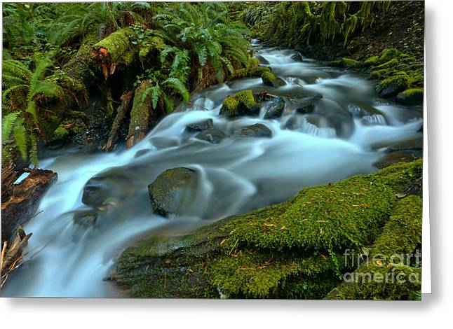 Flowing To Lake Crescent Greeting Card by Adam Jewell