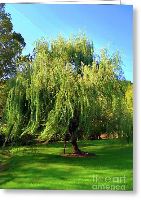 Flowing Willow Painted Greeting Card by Skip Willits