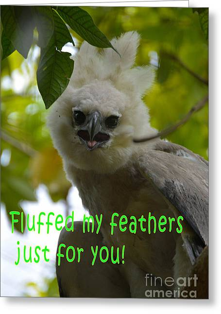 Raptor Tapestries - Textiles Greeting Cards - Fluffed Feathers Greeting Card by Edna Weber