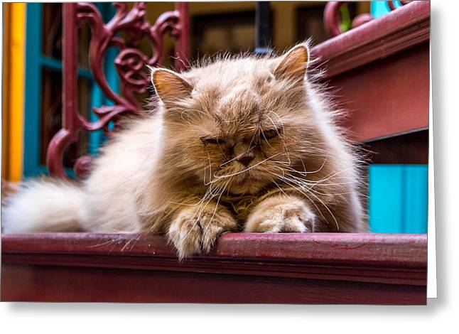 Fluffy Cat Greeting Card by Kelly Michailidis