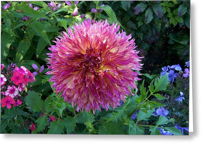 Fluffy Flower Greeting Card by Colleen Neff
