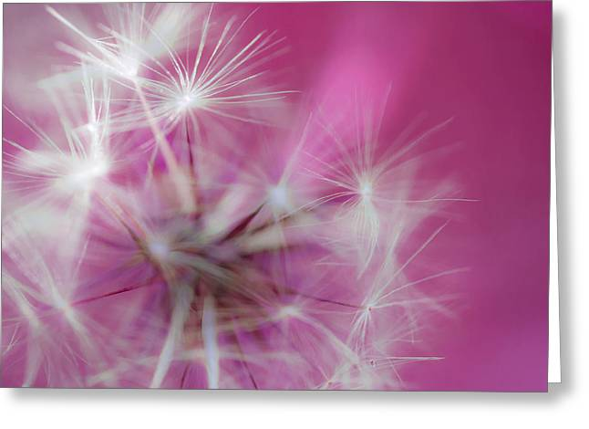 Fluffy Pinkness Greeting Card by Robert Zuchowski