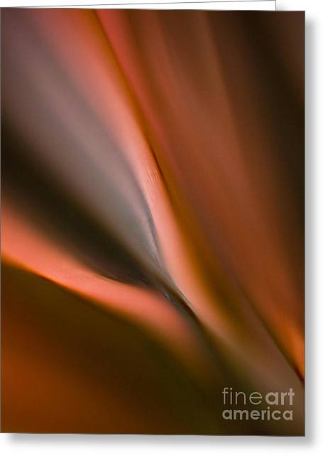 Fluid Blades Greeting Card by Mike Reid