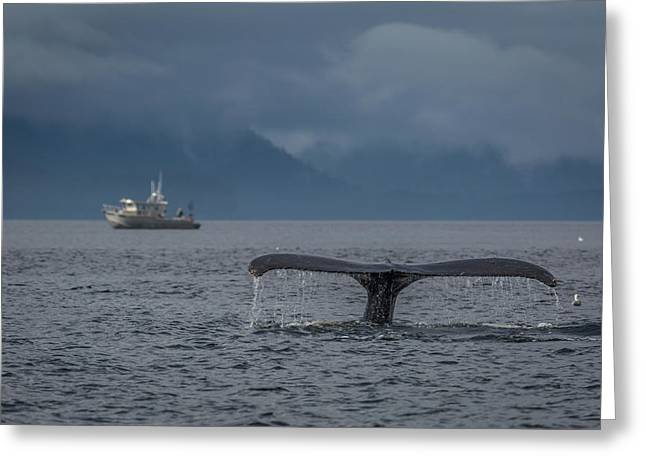 Fluke And A Fishing Boat Greeting Card by Wild Montana Images