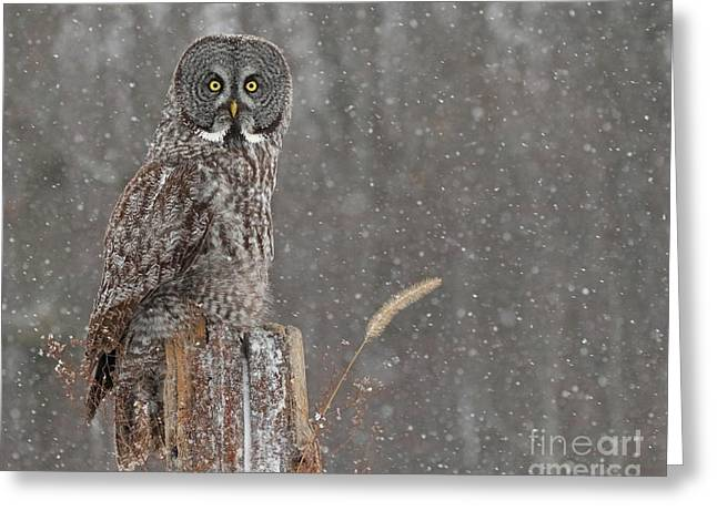 Flurries In The Forecast Greeting Card