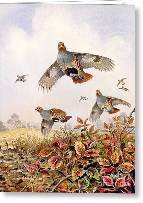 Flushed Partridges Greeting Card