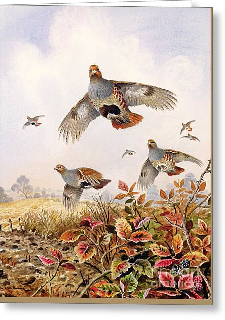 Flushed Partridges Greeting Card by Carl Donner