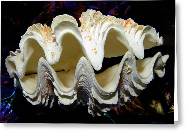 Frank Ocean Greeting Cards - Fluted Giant Clam Shell Greeting Card by Frank Wilson