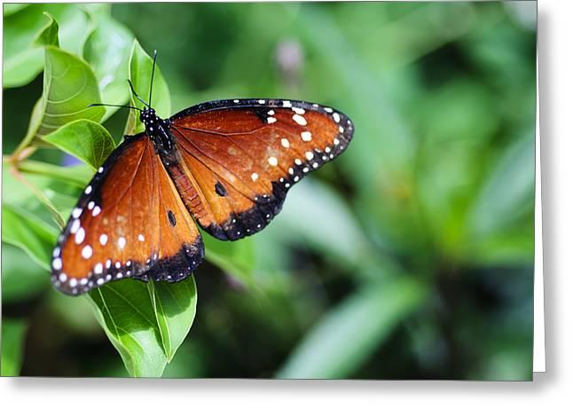 Flutter By Greeting Card by Christi Kraft