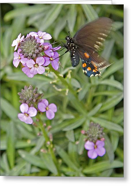 Fluttering Greeting Card by Charlie Osborn