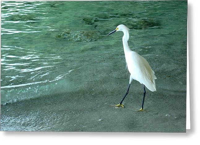 Egret Under Bridge Greeting Card