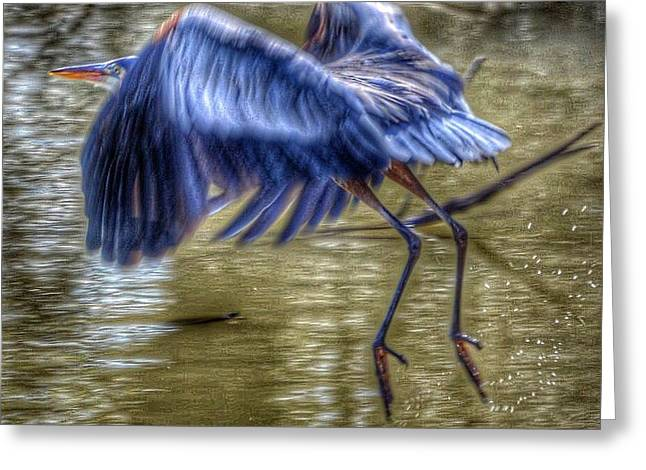 Fly Away Greeting Card by Sumoflam Photography