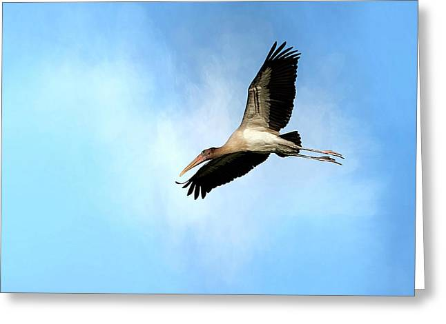 Fly By 2 Greeting Card