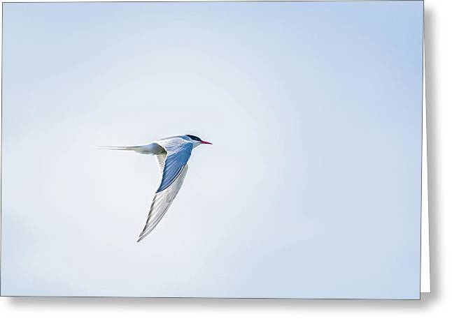 Fly-by Greeting Card by Emily Bristor