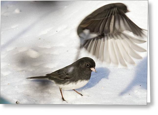 Fly By Greeting Card by Gary Wightman