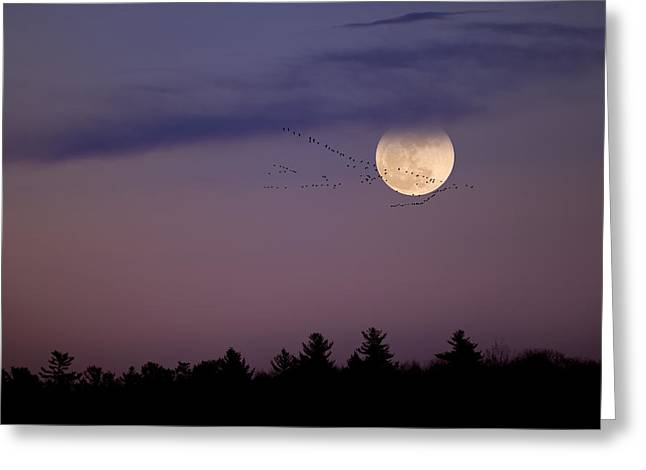 Fly By Night Greeting Card by Bill Wakeley