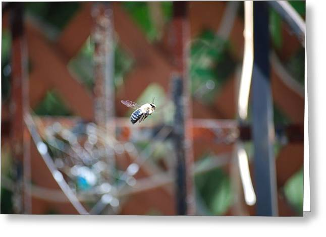 Fly By Greeting Card by Peter  McIntosh