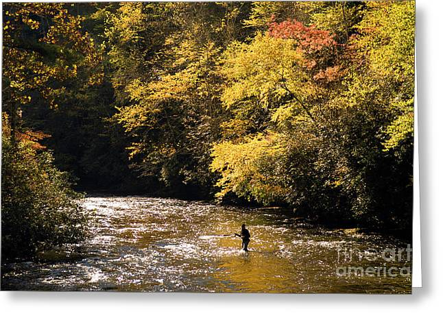 Greeting Card featuring the photograph Fly Fisherman On The Tellico - D010008 by Daniel Dempster