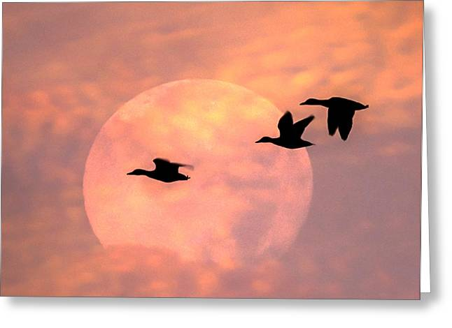 Fly High Moon Geese Square Greeting Card by Terry DeLuco